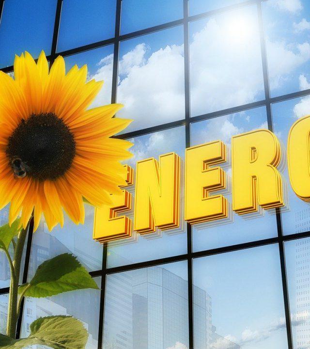 energy, sunflower, font